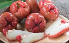 Jambo: a fruta esquecida, apesar de possuir todos estes benefícios medicinais
