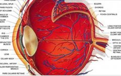 Como ver sem óculos – e não importa o quanto ruim é sua visão