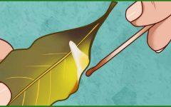 Veja por que você deve queimar folhas de louro em sua casa