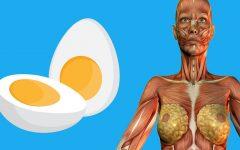 9 coisas que acontecem com o seu corpo quando você come dois ovos no café da manhã