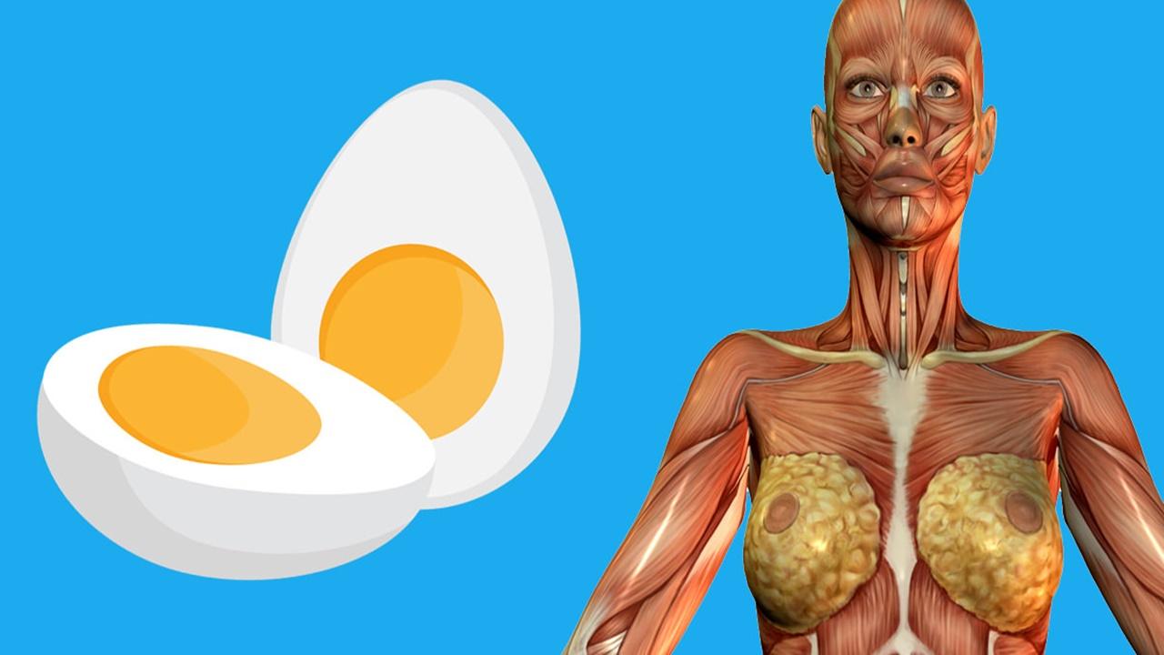 eggs1280