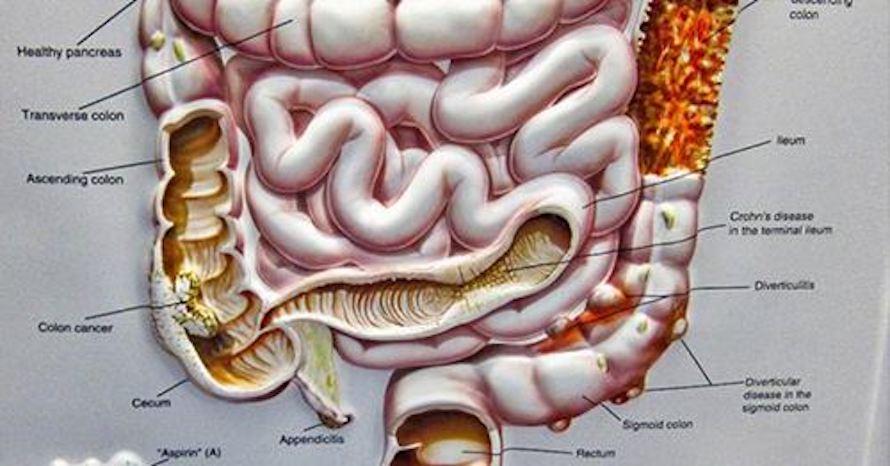 a_relacao_intestino_e_cerebro_-_cura_pela_natureza