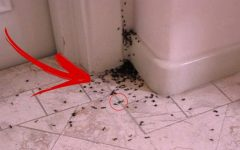 Mata formiga: Este remédio caseiro é o melhor!