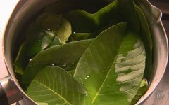 Estudos comprovam os benefícios da folha de louro para a diabetes