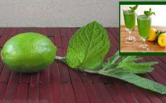 Conheça os benefícios da mistura de hortelã e limão