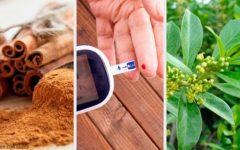 Plantas e Ervas Medicinais para Tratar Diabetes Naturalmente