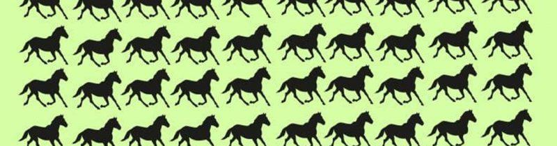 Teste: enigma dos cavalos em 30 segundos