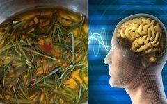 15 Remédios naturais para memória