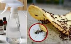 Com este segredo barato, você nunca mais verá formigas em sua casa