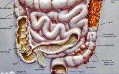 Como as bactérias do intestino influenciam nossa mente e têm relação com a ansiedade e depressão