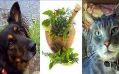 7 receitas caseiras para você tratar seu cão ou gato de forma natural