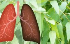 7 plantas para oxigenar melhor o corpo e elevar a sua imunidade