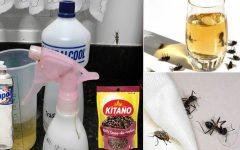 Solução com cravo-da-índia: eficaz contra moscas, pernilongos, formigas e baratas