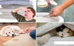 Como tirar cheiro de xixi do colchão, sofá e banheiro