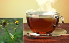 Chá de picão-preto: controla diabetes, alivia hemorroidas e protege fígado