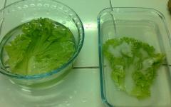 Como conservar alface e outras folhas na geladeira
