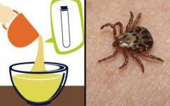 Receita caseira para eliminar pulgas e carrapatos de uma maneira muito rápida e natural