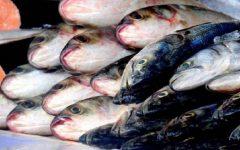 Doença da urina preta: conheça quais peixes podem provocar síndrome rara; especialistas ligam alerta