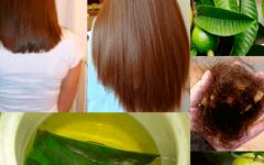 Tônico de folhas de goiabeira para pôr fim à queda de cabelo