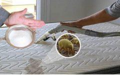 Como limpar colchão e travesseiro para ficar livre dos ácaros