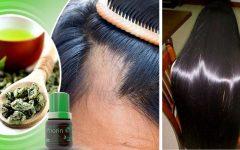 Extrato de Priorin no cabelo combate a queda e acelera o crescimento dos fios