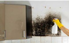 Como limpar parede com bolor e mofo