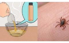 Elimine pulgas e carrapatos [Receita Caseira]
