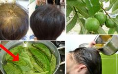 Como fazer tônico caseiro para os cabelos com folhas de goiaba [Receitas naturais]