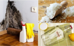 Receitas caseiras para remover da umidade da casa