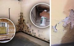 Como Eliminar Umidade da casa – Truque Fácil, Barato e Eficaz